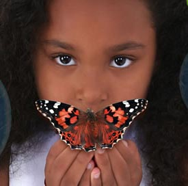 Girl with Butterfly Transforming